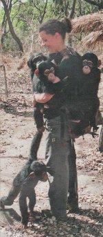 jeunes chimpanzés orphelins